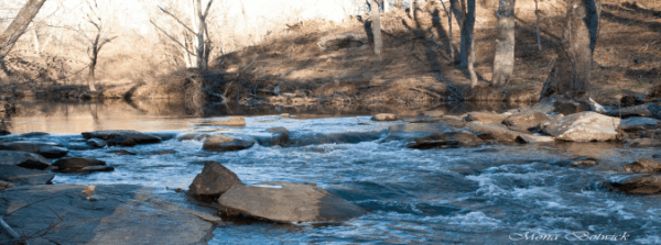 Goose Creek Beauty