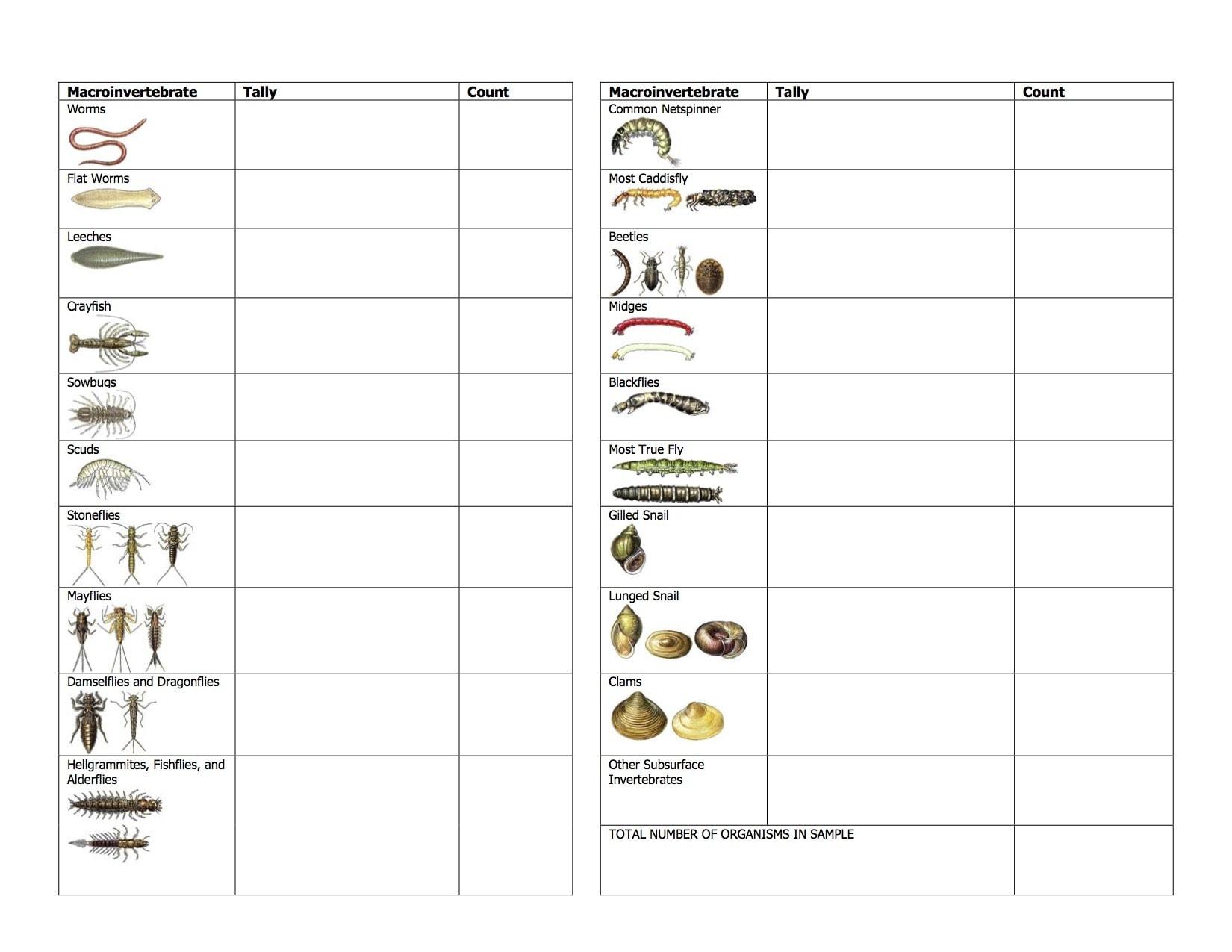 water quality worksheet worksheets for school leafsea. Black Bedroom Furniture Sets. Home Design Ideas