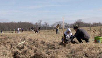 Goose Creek Challenge participants planting trees