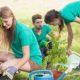 Trees, Trees, Trees!  2020 Plantings!
